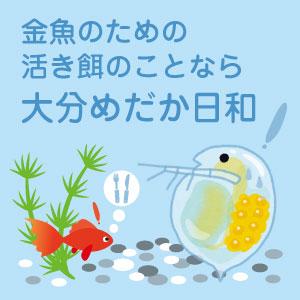 金魚の活き餌を探す