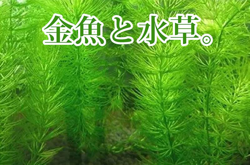 金魚と水草の関係